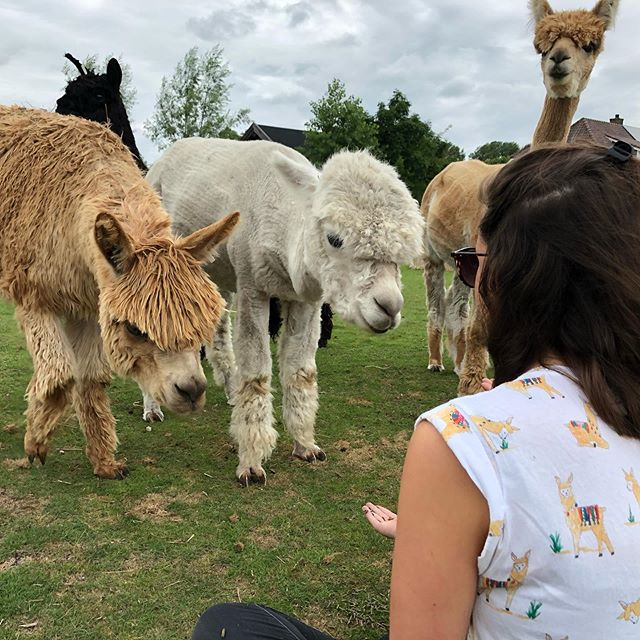 How to spot a real alpaca fan! Take a look at her t-shirt :) #alpaca #alpacalove #alpacas #alpacafarm book your session (see bio)