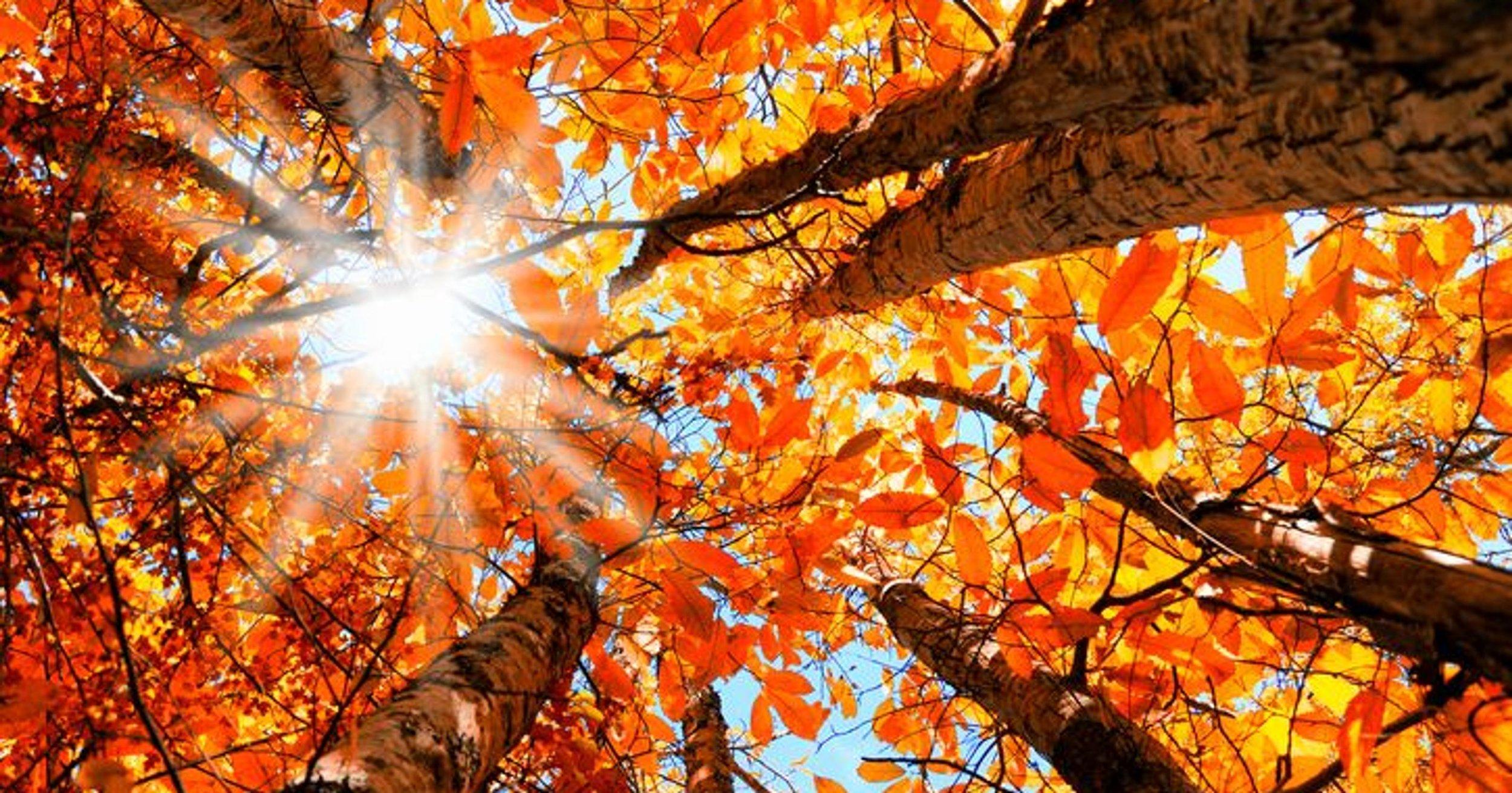 Fall Term -