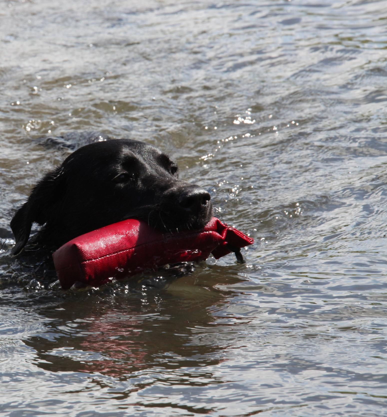 I LOVE WATER - Never tried backstroke!