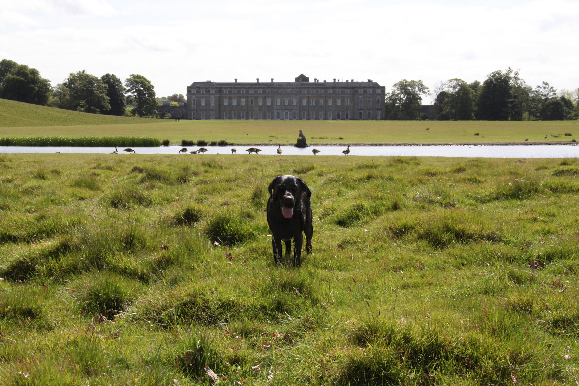 That is one big house! - How many dogs live in it?