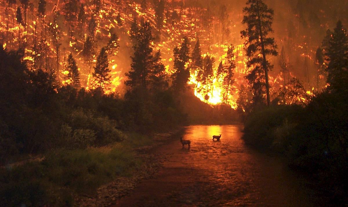 wildfire-deer.jpg