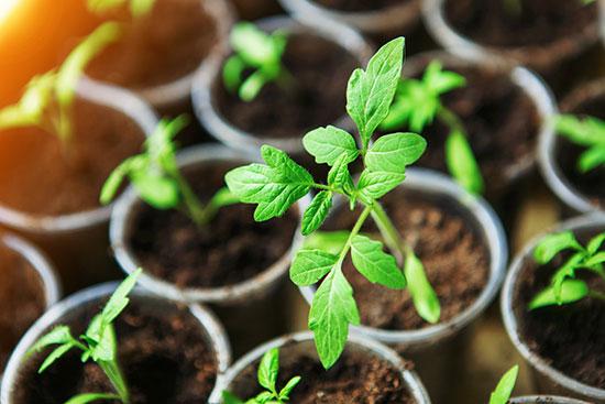 seedling jpg.jpg