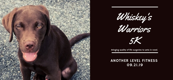 Whisky (Coach Katie's dog) suffers from severe hip dysplasia.
