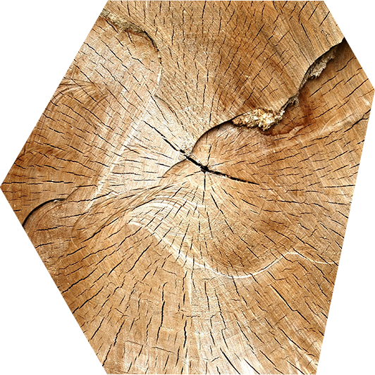 Holz_0.1.png