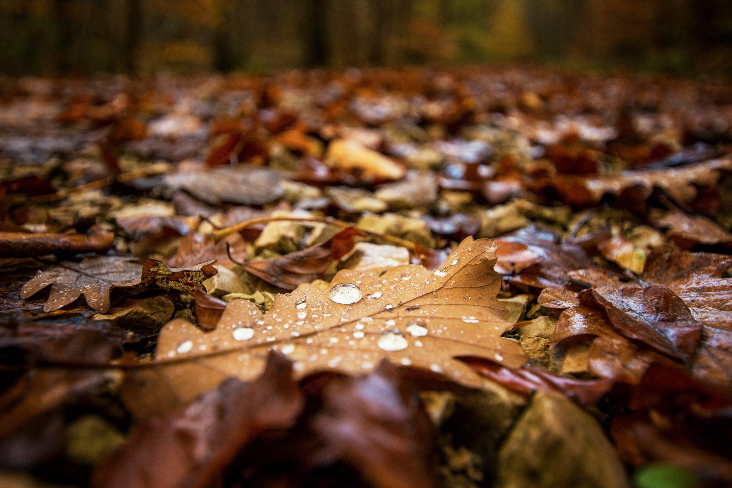 rain blog pic.jpg