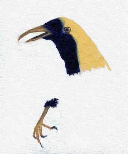 Blue, Yellow, and Transparent Bird