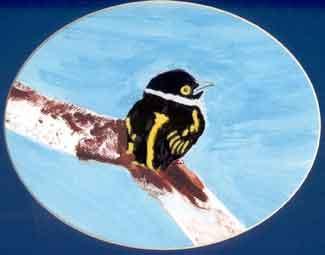 Black and Yellow Broadbill