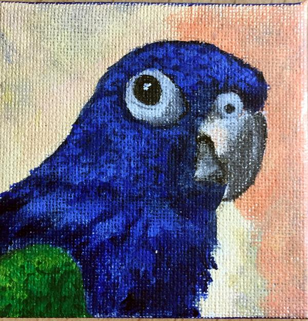 Pea, Blue Head Pionus