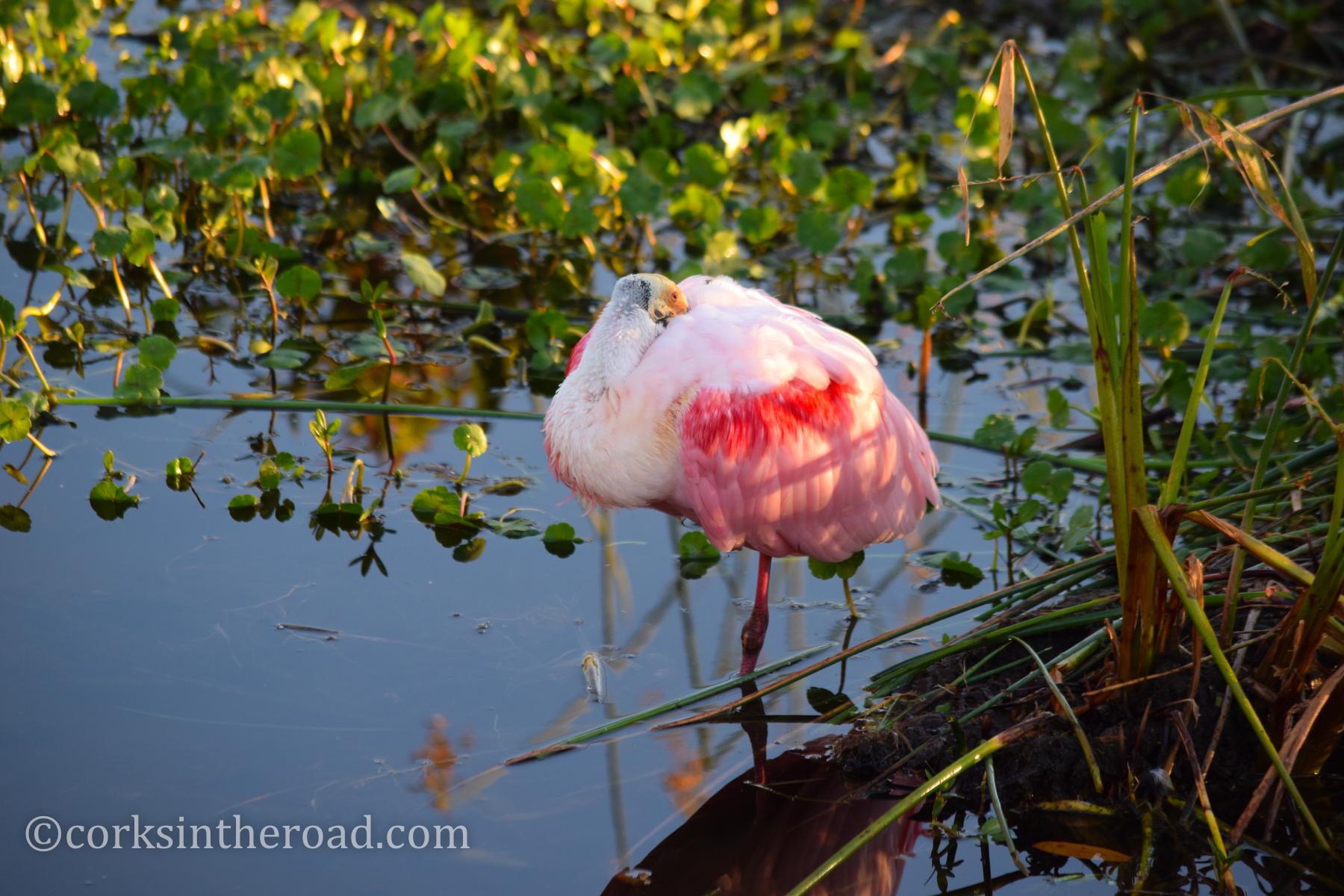Birds-Personal-Swamp-Wakodahatchee.jpg