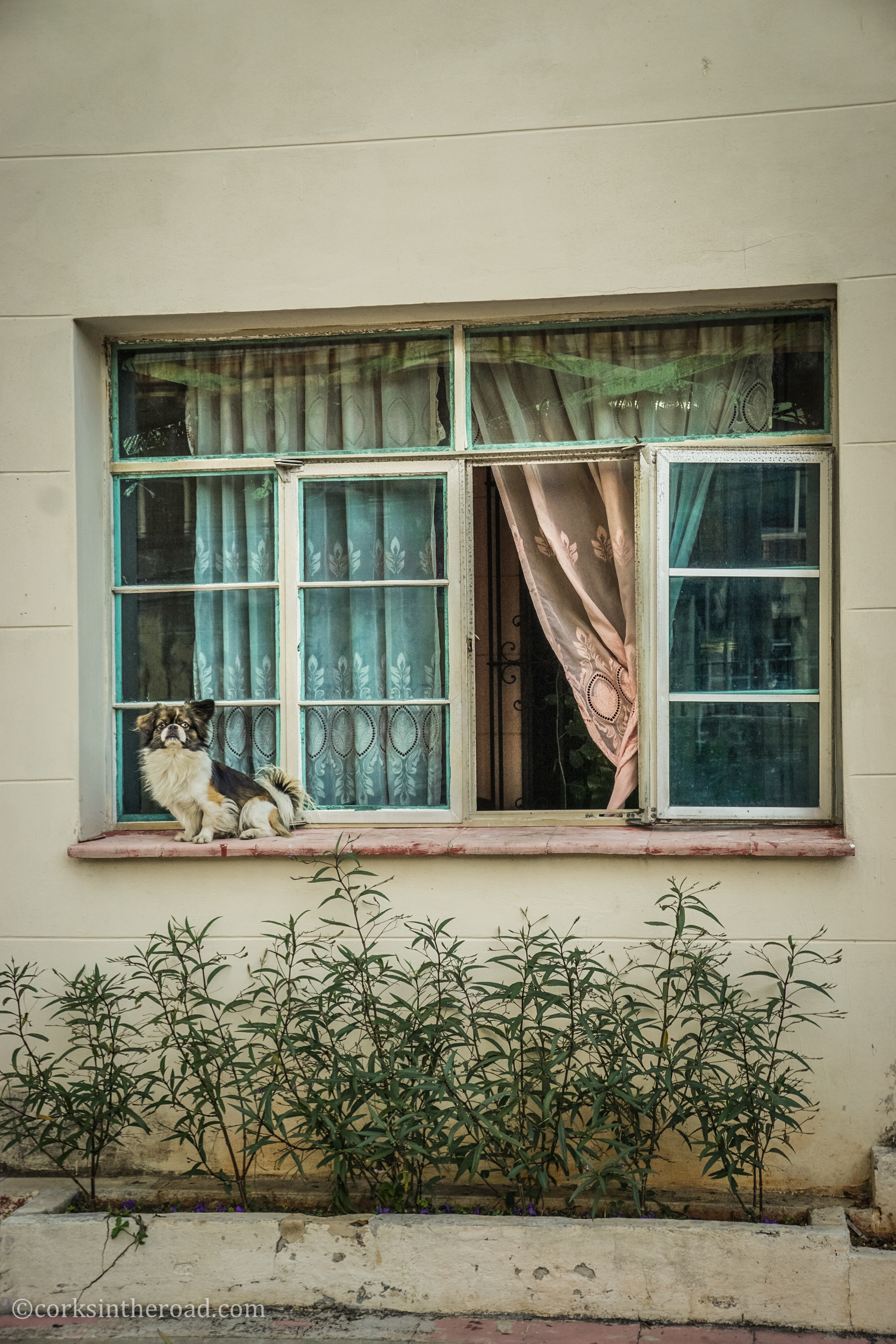 Corksintheroad, Cuba, Dogs, Doorways, Havana.jpg