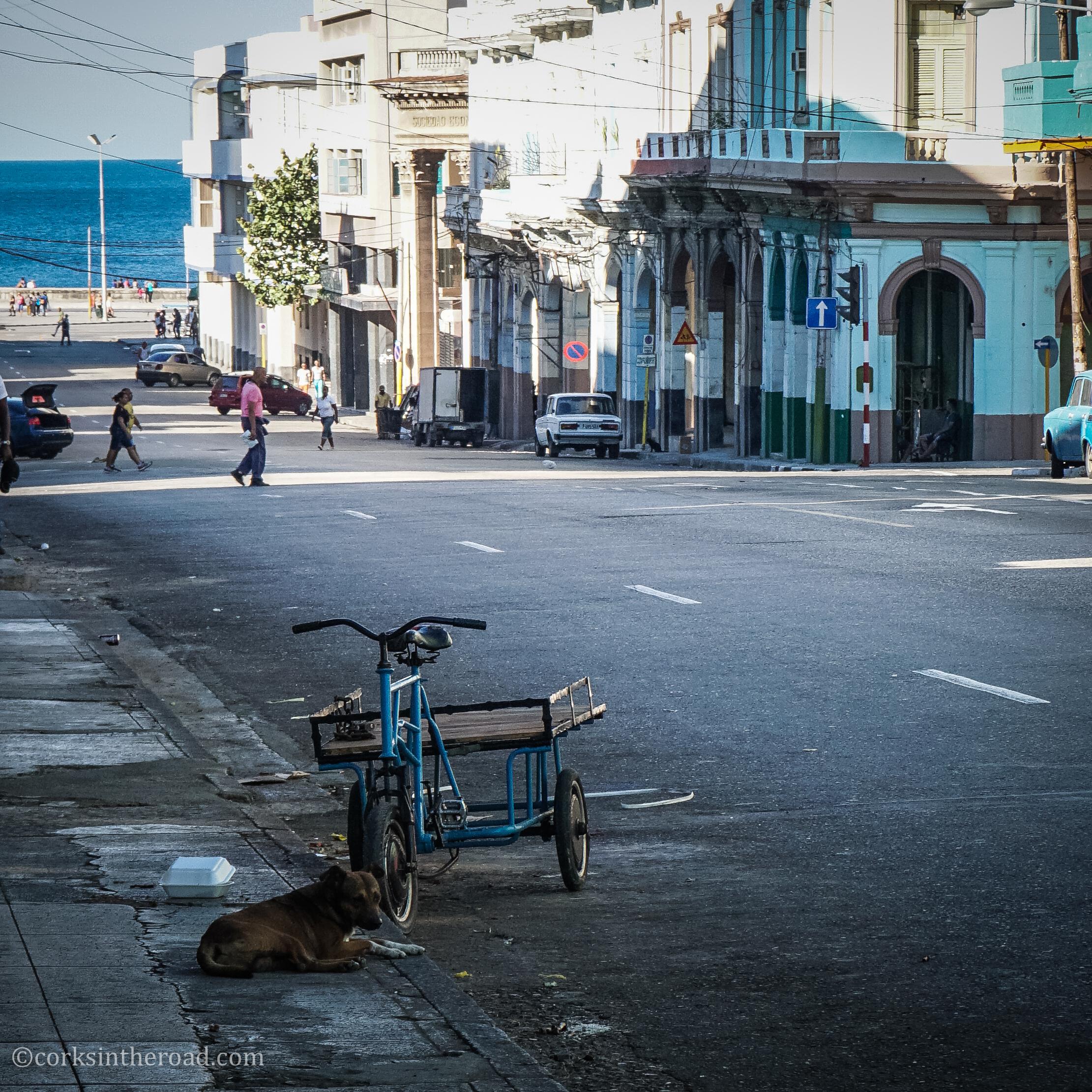 Corksintheroad, Cuba, Dogs, Havana.jpg
