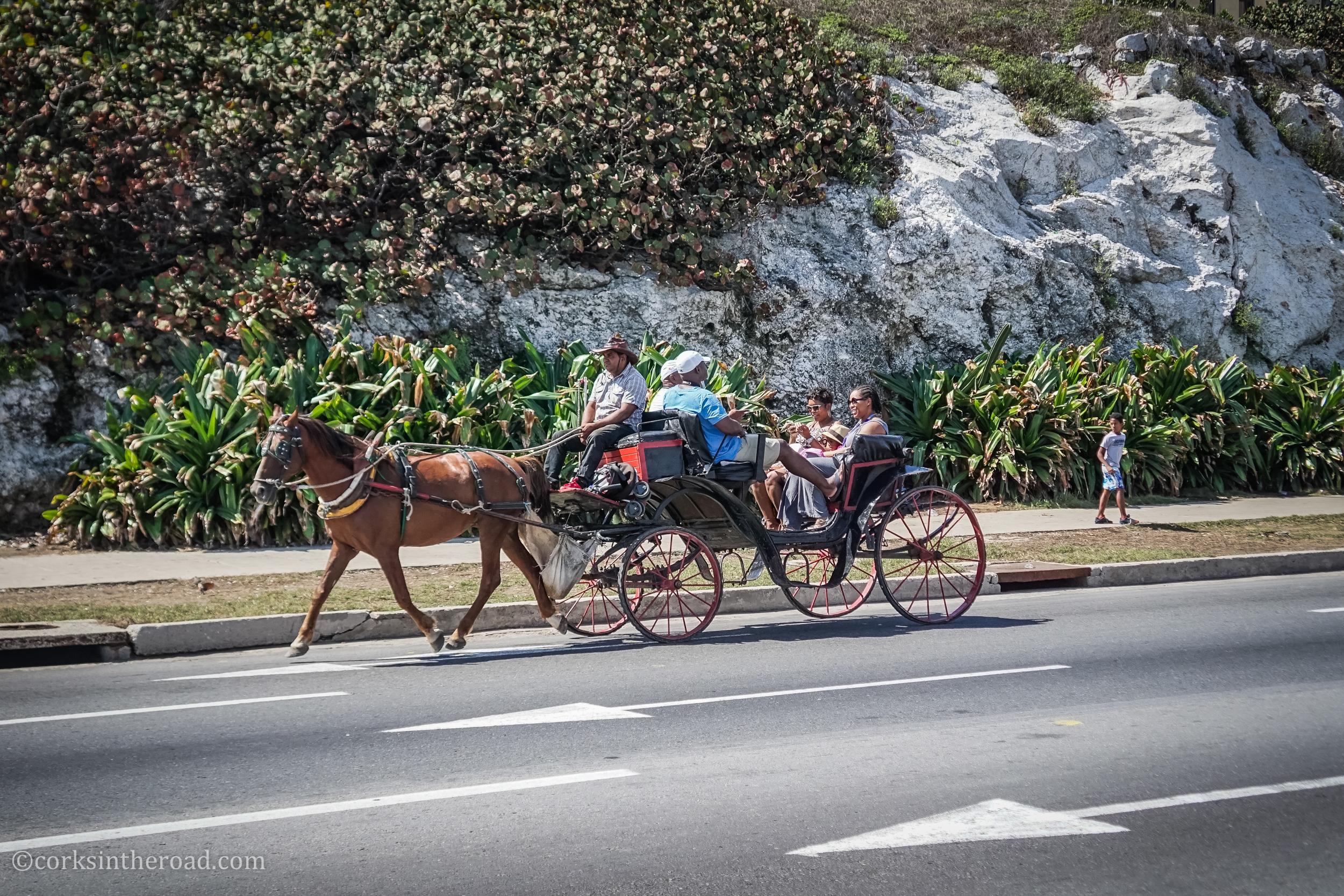 Corksintheroad, Cuba, Havana, Horses-3.jpg