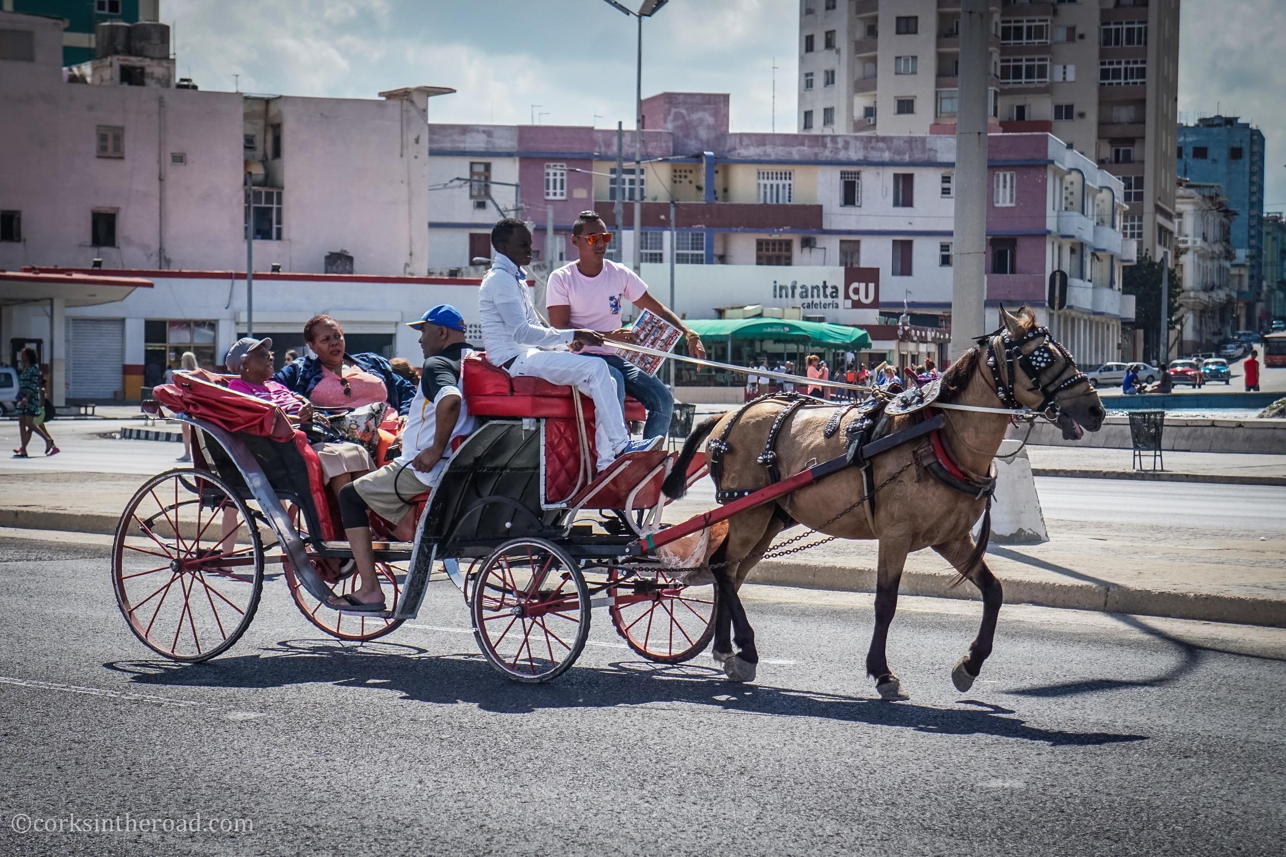 Corksintheroad, Cuba, Havana, Horses.jpg