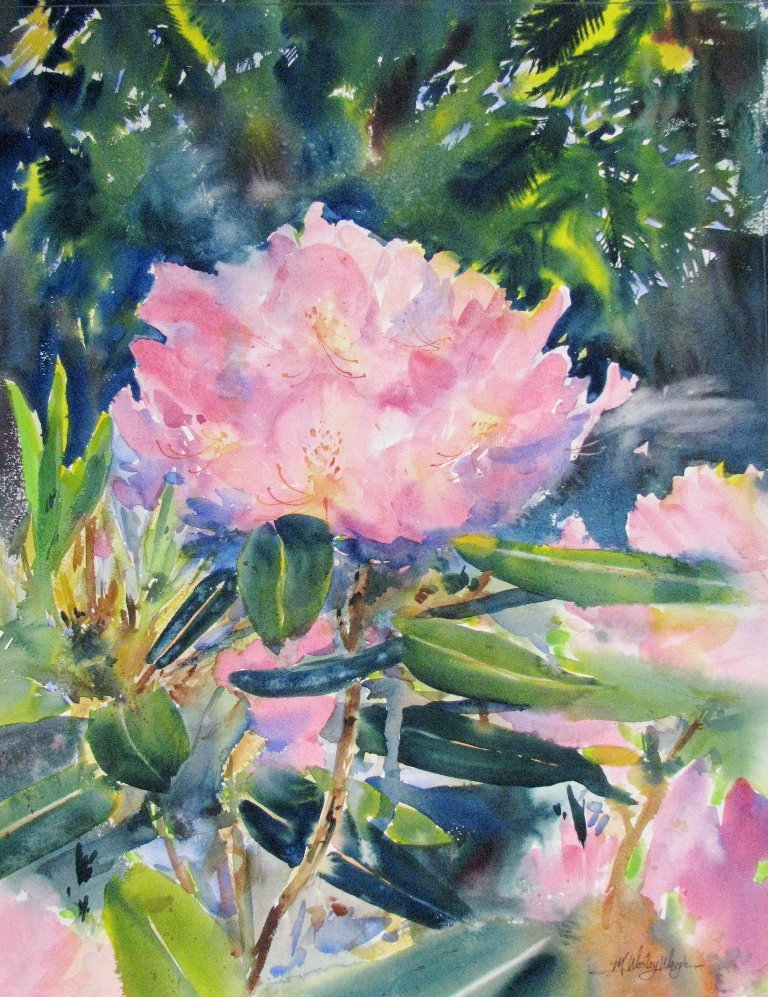 Rhododendron *