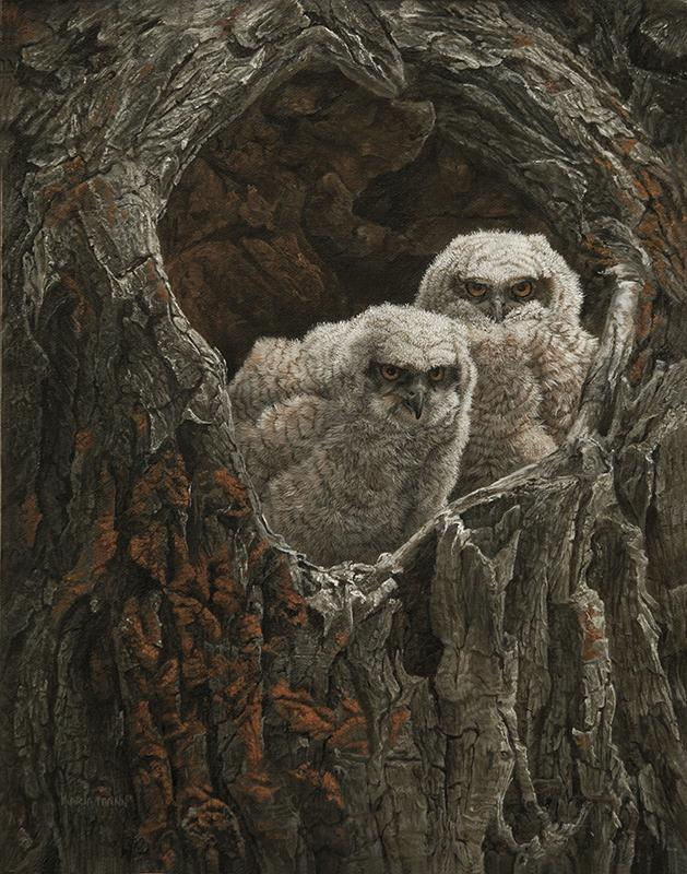 Horned Owl Chicks