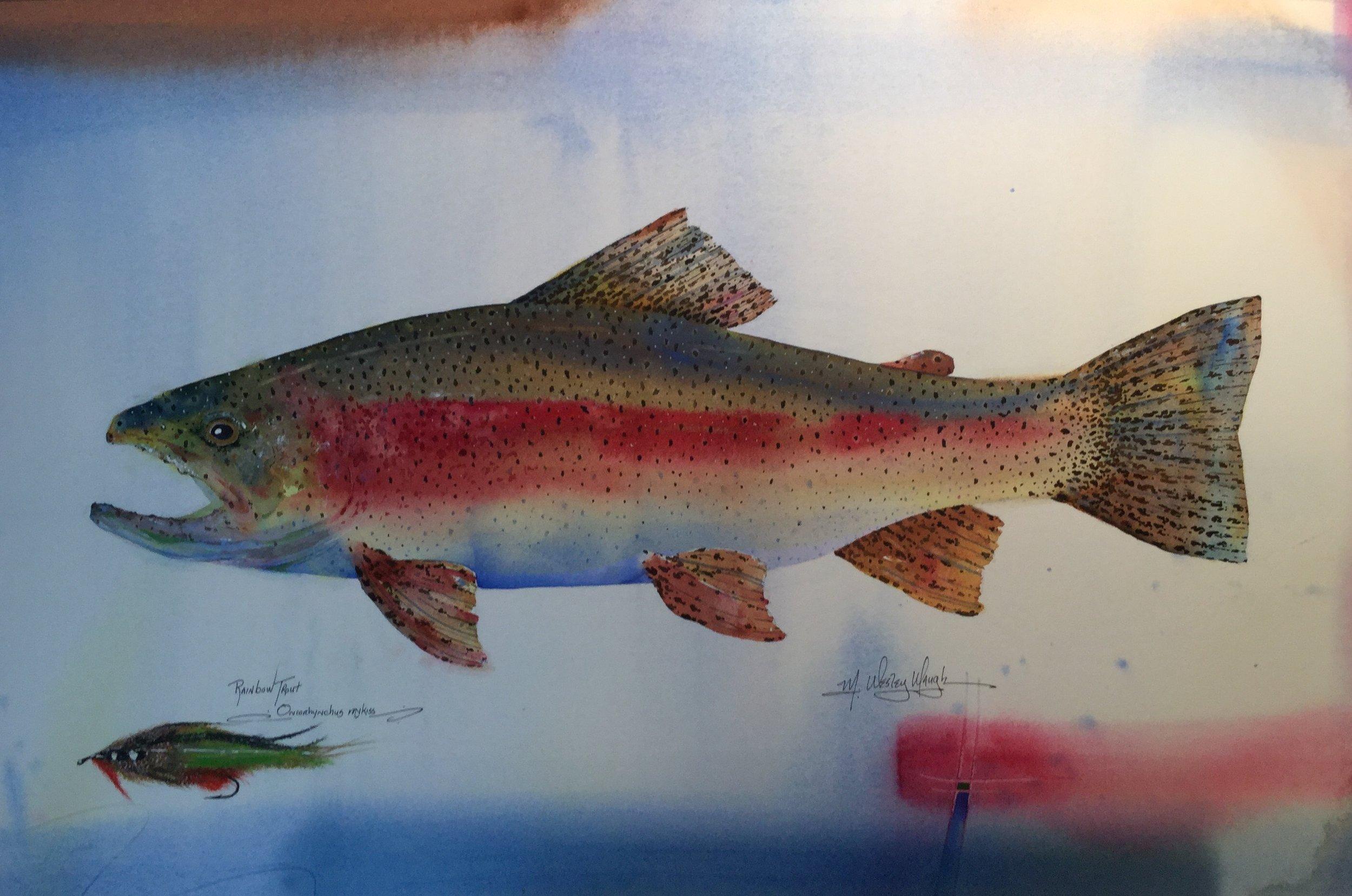 Rainbow Trout *