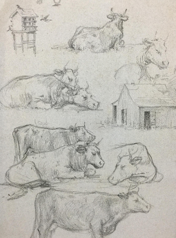 Cow Sketch *