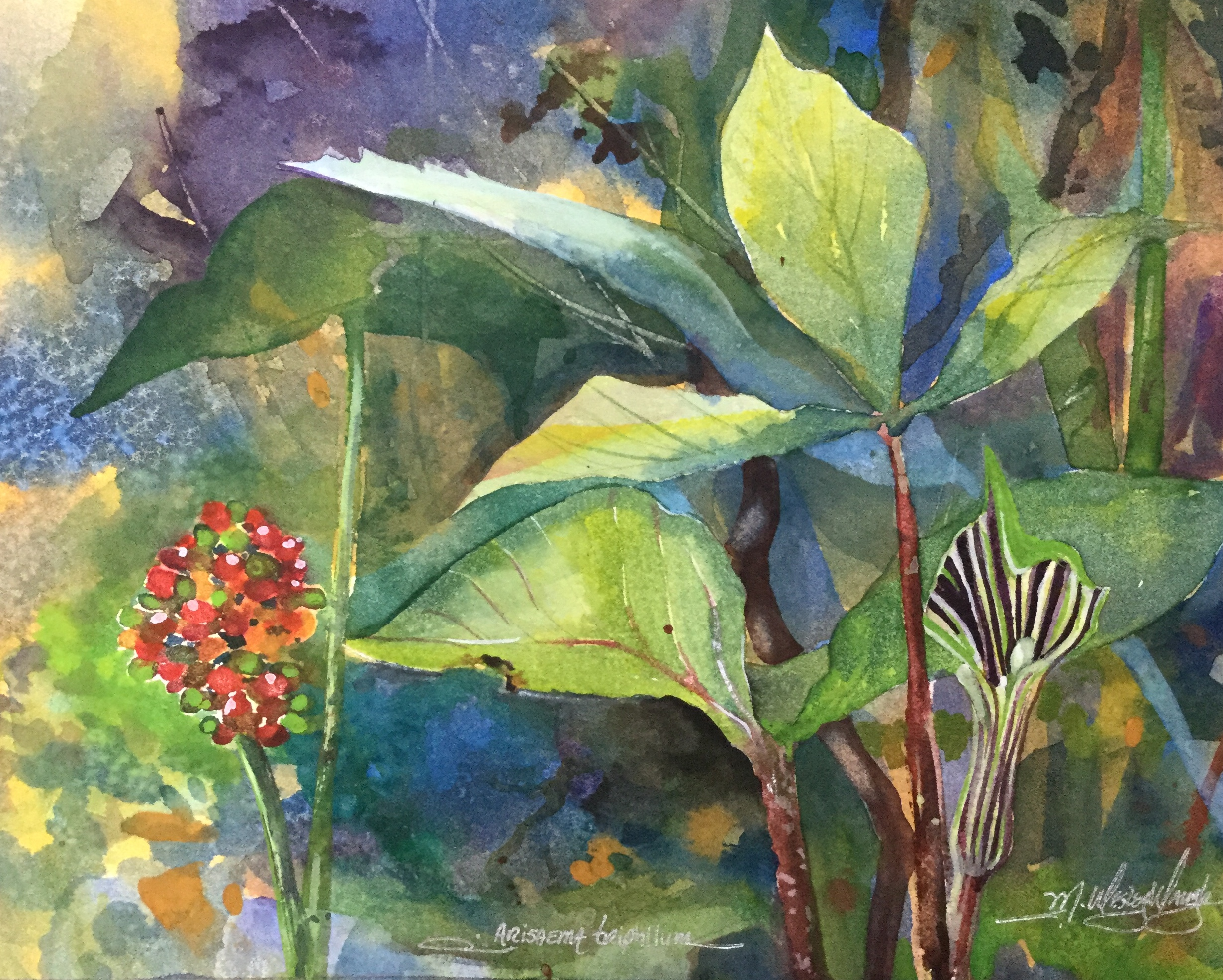 Jack in the Pulpit *