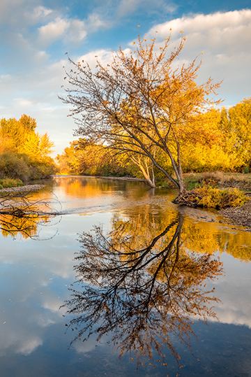 Autumn River Trees crop.jpg