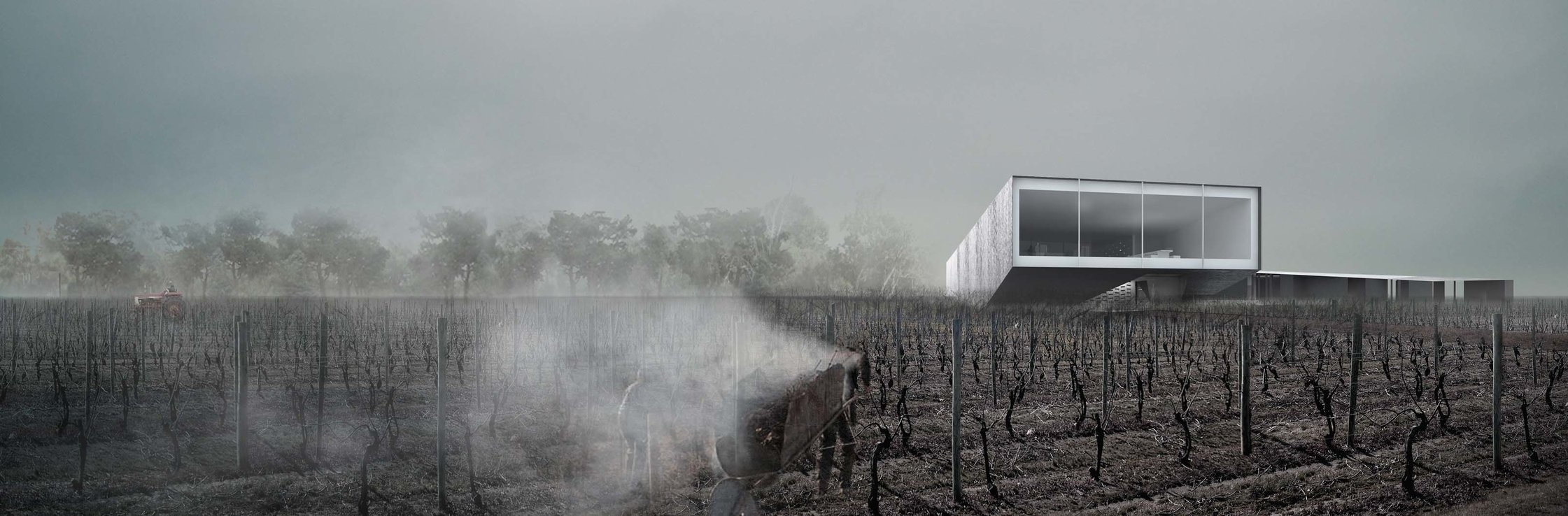 Copy of Copy of Pearl Morrisette Winery - VIneyard Fall fields