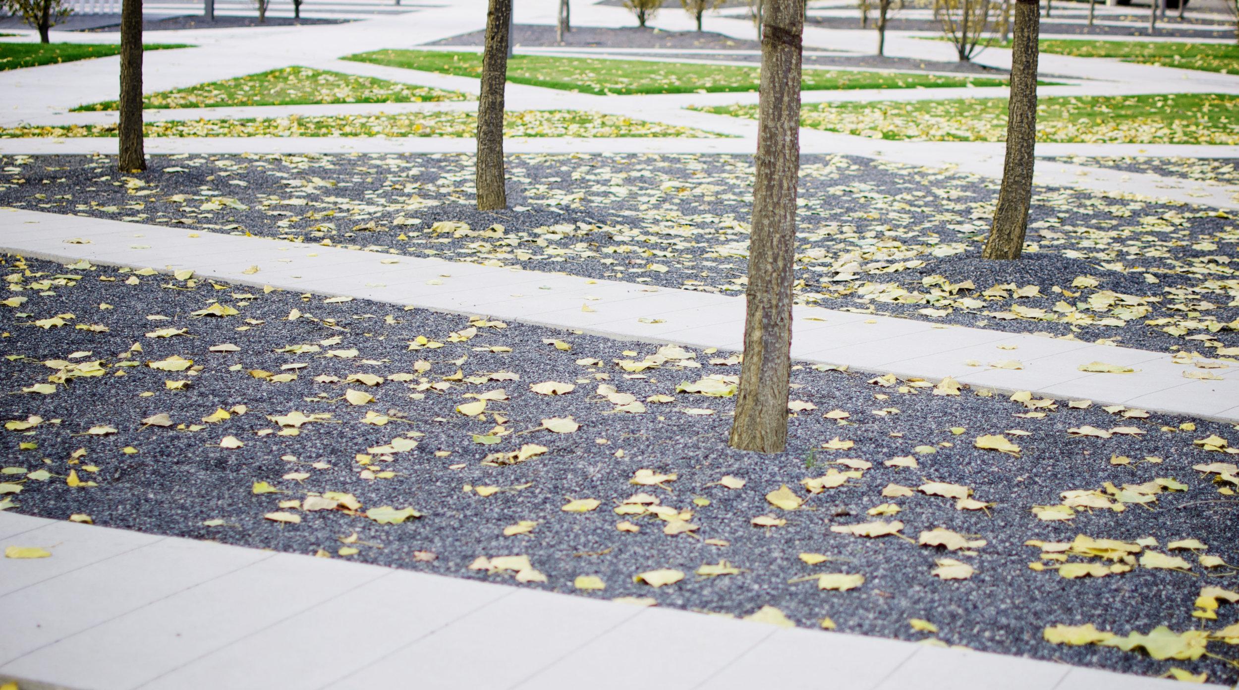 Scholars Green - pathway gravel paving fall tree