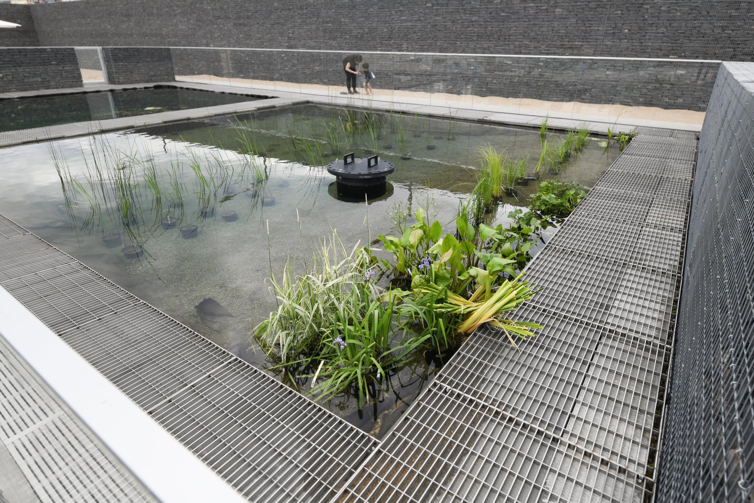 gh3 - Borden Park Natural Swimming Pool - Hydrobotanic Pond