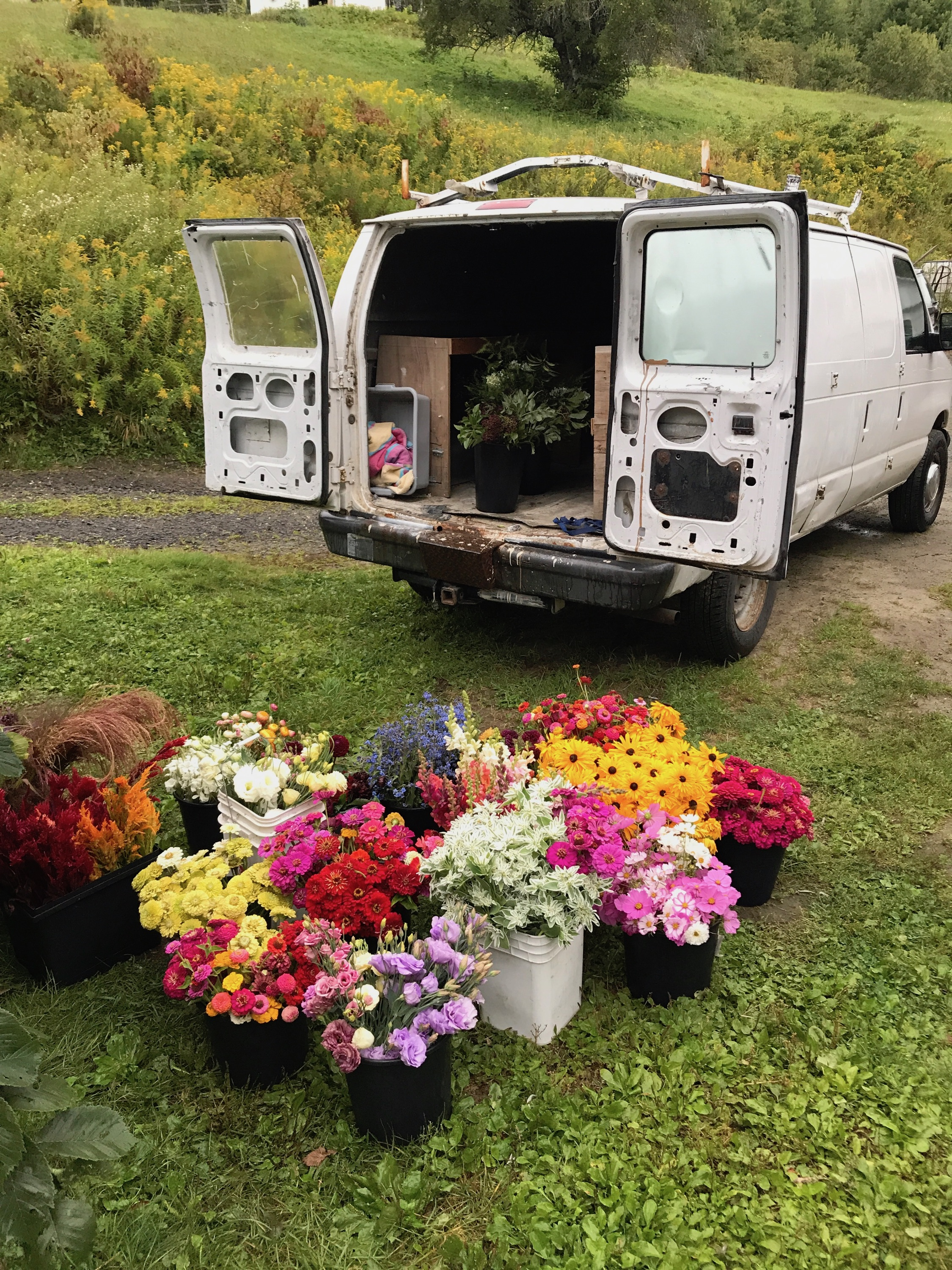 Stitchdown Farm local wholesale flowers  Vermont