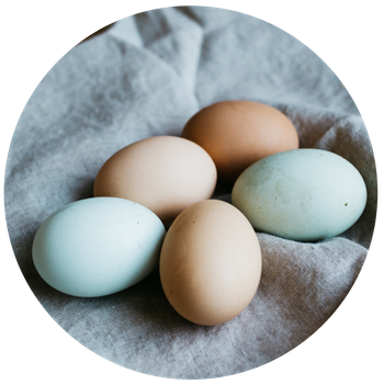 EGGS-product.png