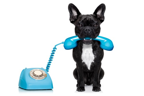 CALL US TODAY TO FIND OUT MORE ABOUT OUR HOSTED PHONE                          SERVICES: 614-362-8201