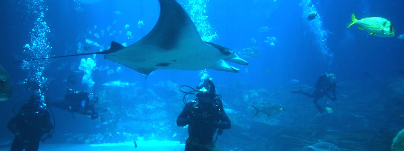 Georgia Aquarium April 2017
