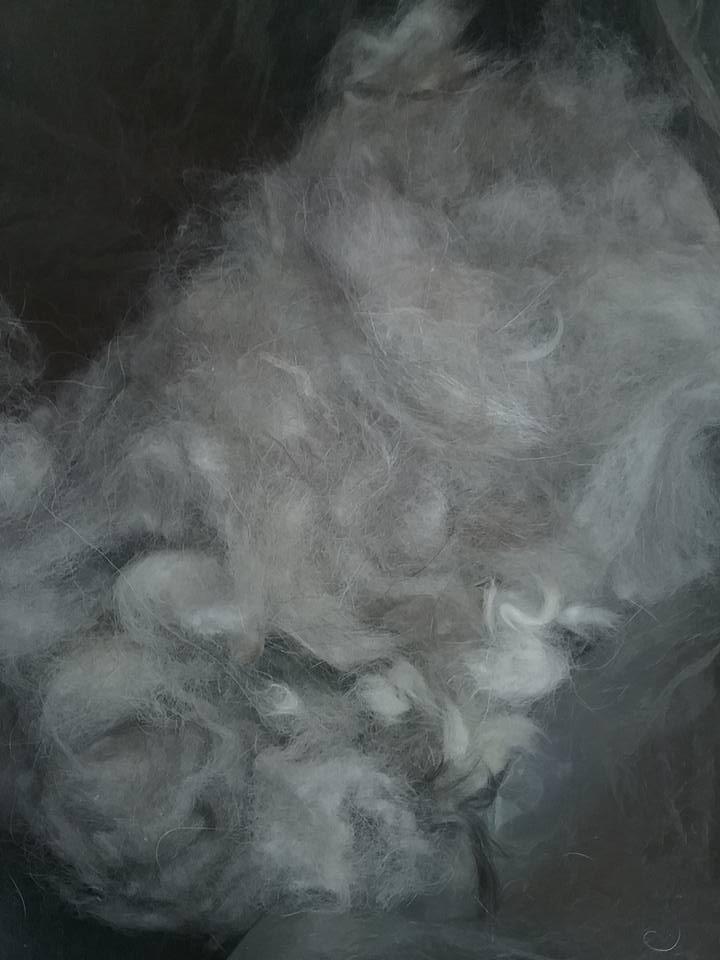 Siberian Husky Raw Fur 2.jpg