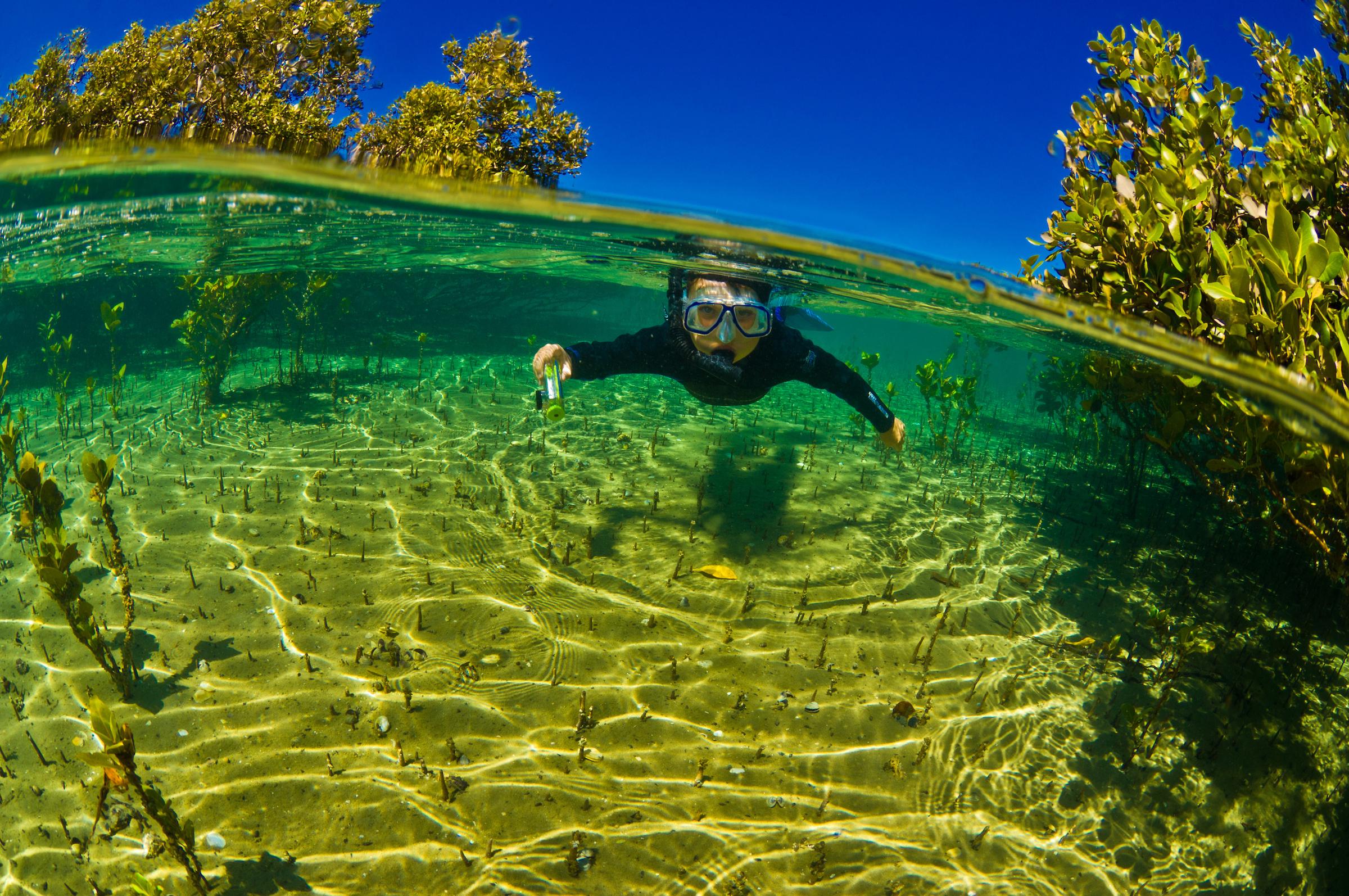 Mangroves_01.jpg