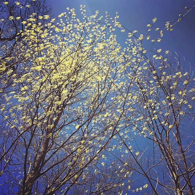 Re-birthday celebration. Trees swaying to wind song.  Happy baby leaves rock n roll #walkyourway #wayfindingstory