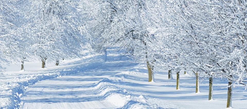 snow_day.jpg
