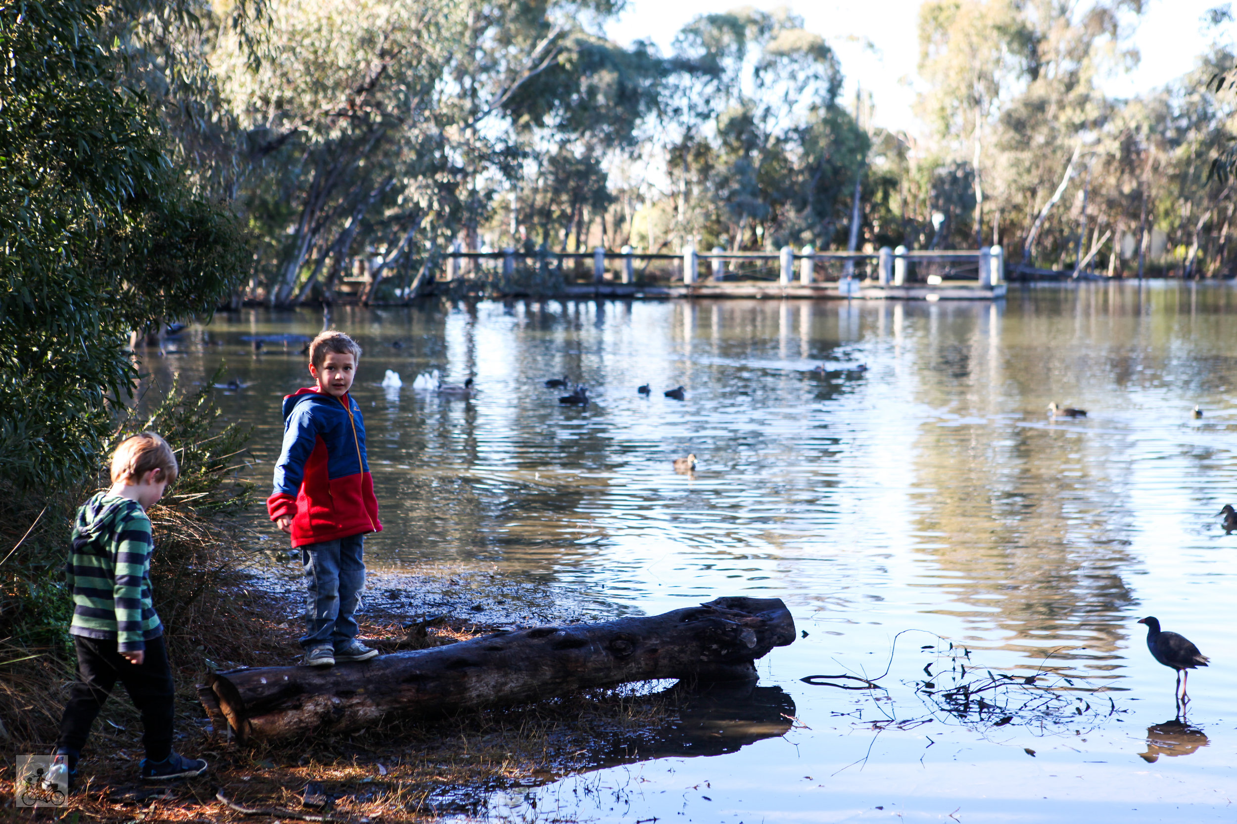 redleap reserve, mill park - mamma knows north