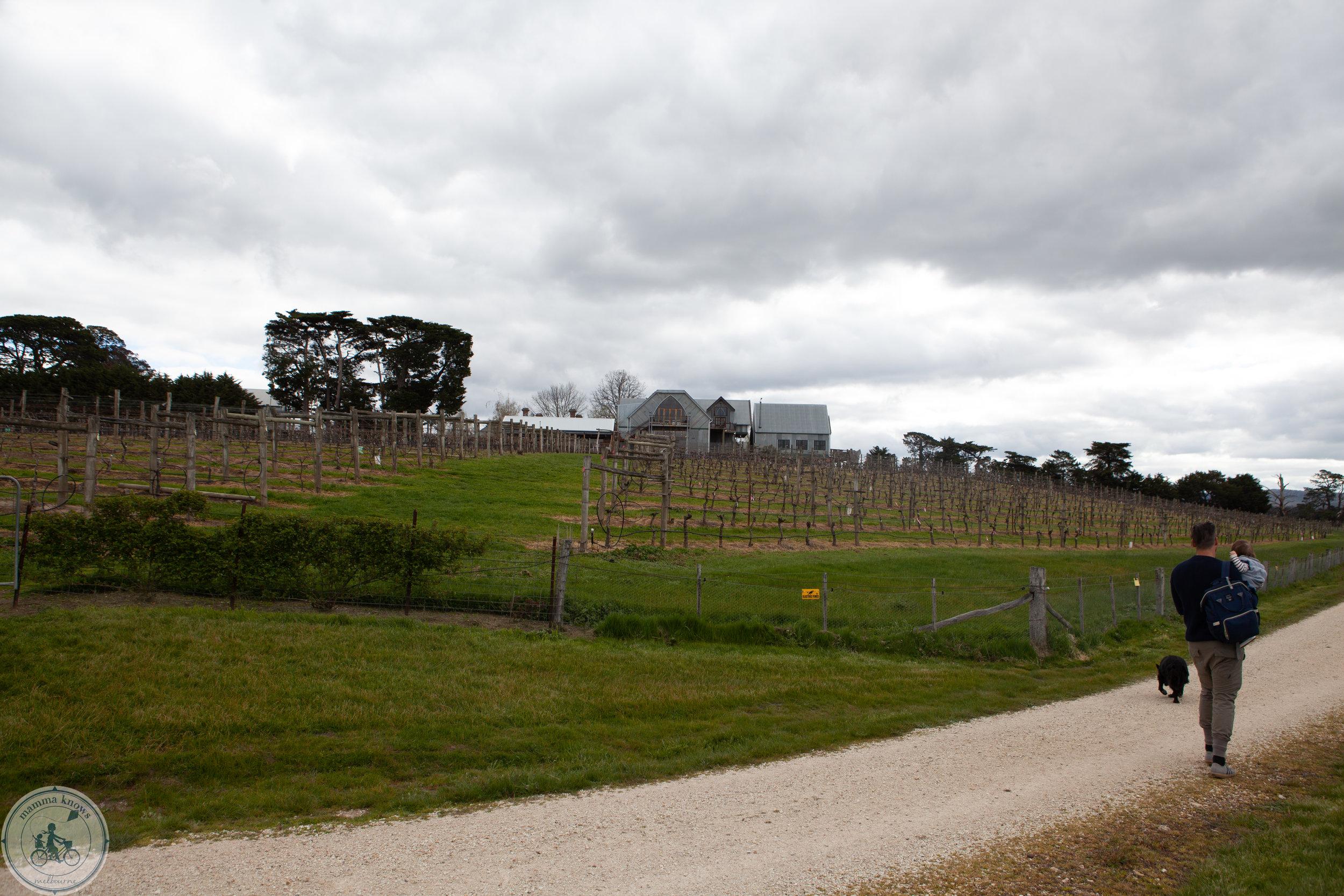 cleveland winery mkn-34.jpg