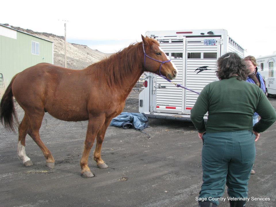 Horse in Crane.jpg
