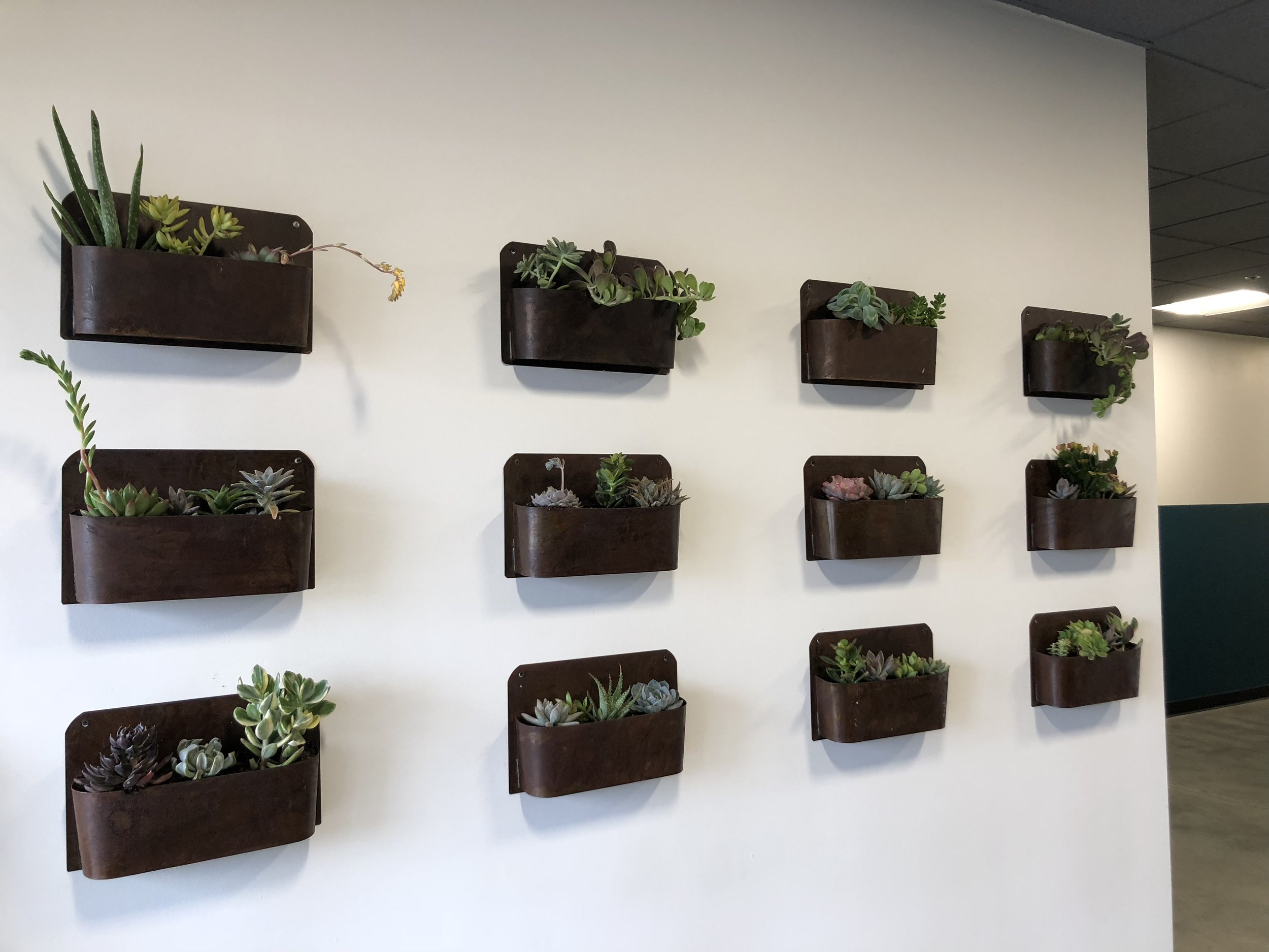 Succulent Wall.jpeg