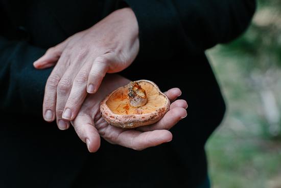 mushrooms1-2