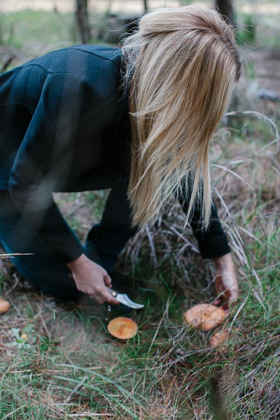 mushrooms2-4