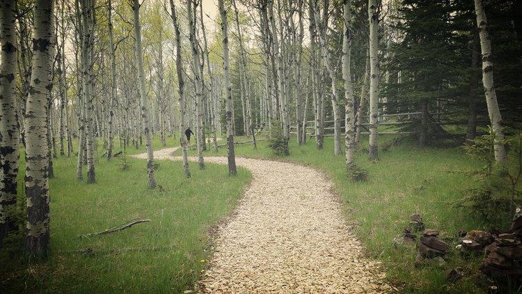Pave+a+new+path.jpeg