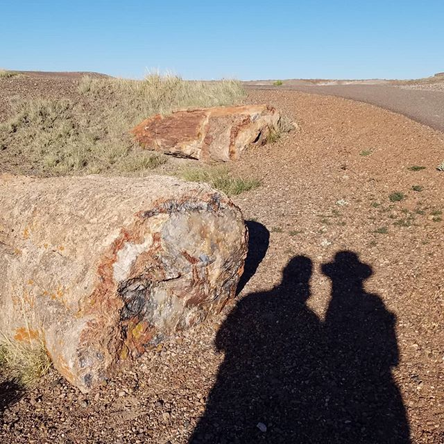 How permanent are we?  Our shadow...until the sunsets. Our life...a handful of decades. The Petrified Forest...218 centuries and still going.  #livewell #appreciatelife #enjoylife #findyourway #impermanence #purpose