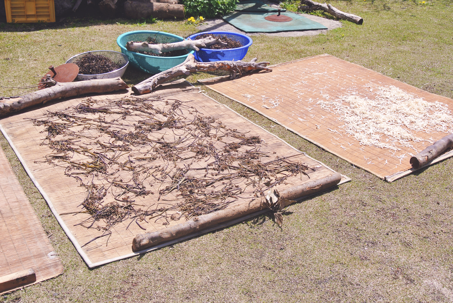 Gosari, Korean fern bracken, laid out to dry in the spring sun of Jeju Island.