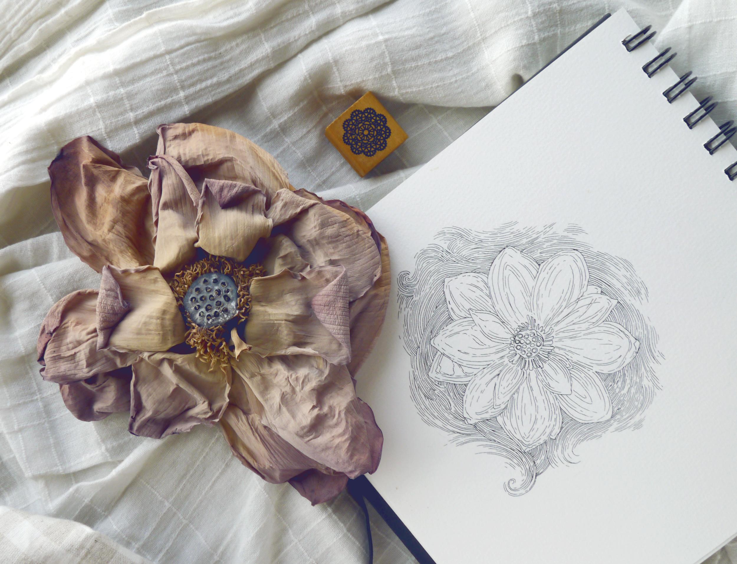 lotus-flower-tea-korea-sketch.png