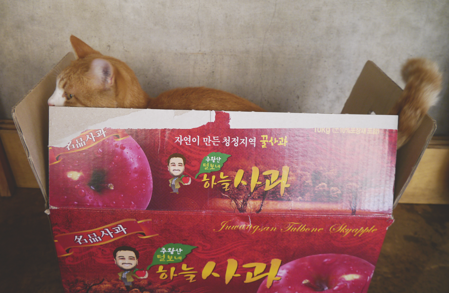 It's also the time when Korean postal services get hopelessly overloaded with boxes over boxes of gifts - mostly food! We received a huge box full of apples, for example.  Hedwig liked the box in particular.