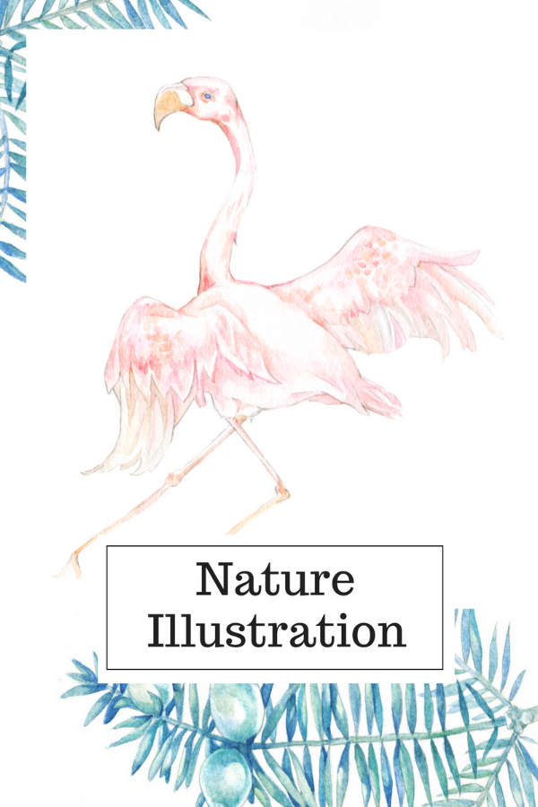 I used some of my skills learnt for Science Illustration to draw simpler illustrations of animals and plants for guidebooks, postcards and children's picture books.