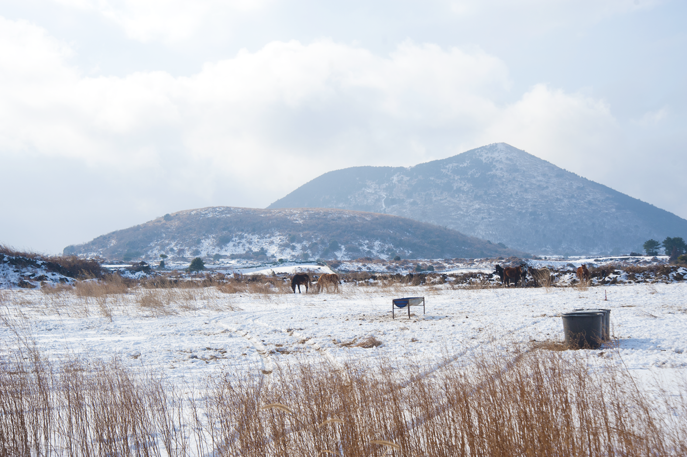 """Hiking on Jeju Island in winter: If Hallasan is too daunting (or you don't have the equipment needed for that icy route) you can choose between hundreds of """"Oreum"""" - volcanic crater formations - all over the island for short trips."""