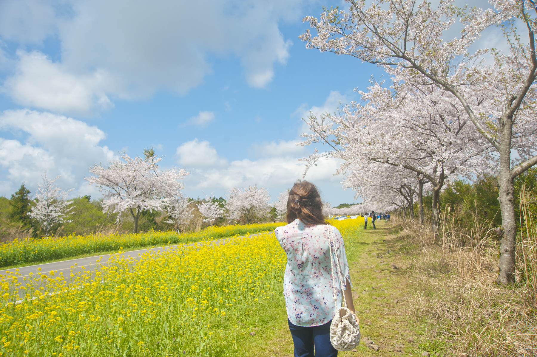 The beginning of April marks the cherry blossom season on Jeju Island, with the rest of Korea following swiftly as temperatures rise.  For a few beautiful days, the whole island is covered in flowers - not only cherry blossoms, but yellow canola flowers and the last of winter's camellia flowers can be found.  Spring is in the air and everyone heads outdoors for a picnic under cherry trees or to one of the festivals that celebrate the season.  If you plan on catching this colorful and romantic moment in time when you travel to South Korea, it's best to keep an eye on weather predictions and plan your trip accordingly.  I've got some tips for you below - and a whole lot of pictures and travel sketches to capture that cherry blossom ~aesthetic~.
