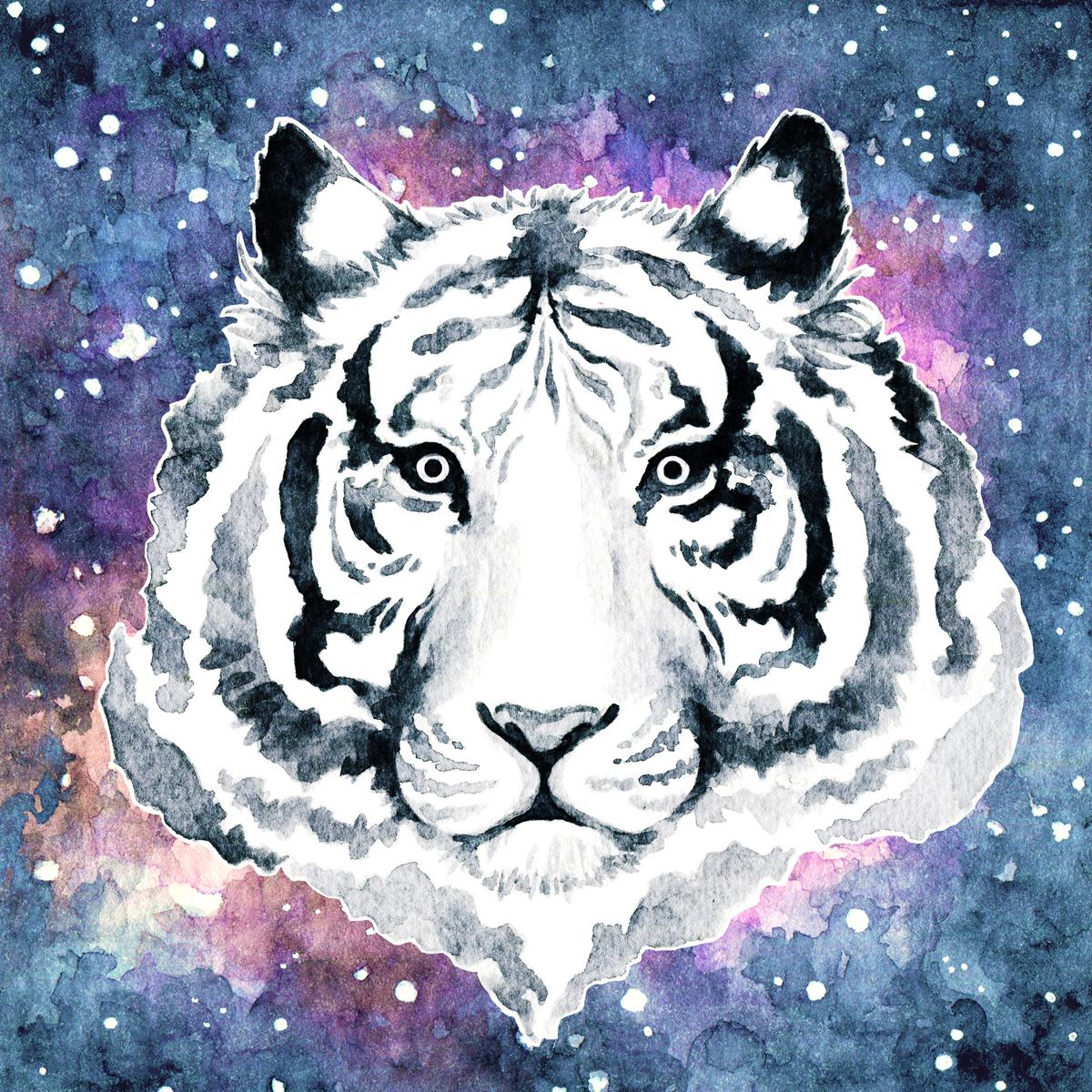 tiger-illustration-nebula.png