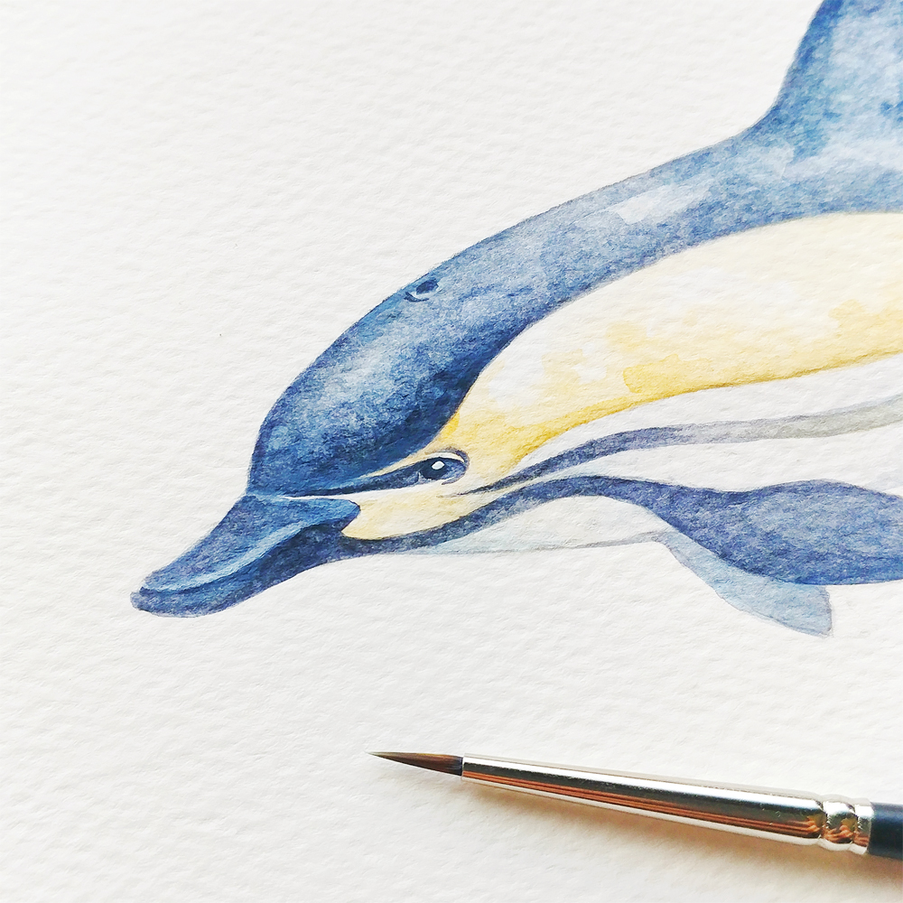 common-dolphin-watercolor-illustration copy.JPG
